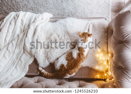 Cat sleeping on a couch on furry blanket one winter day. Cosy scene, hygge concept, top veiw.