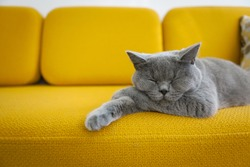 Cat sleeping on a mustard yellow sofa.