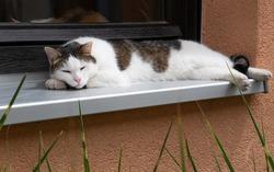 Cat sleeping on a window sill