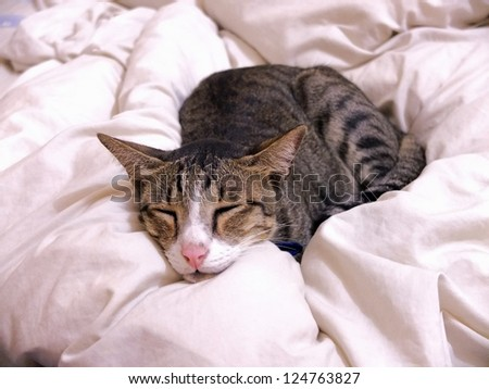 Cat sleeping on bed cover at home.