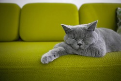 Cat sleeping on green sofa.