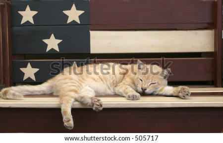cat sleeping on patriotic bench