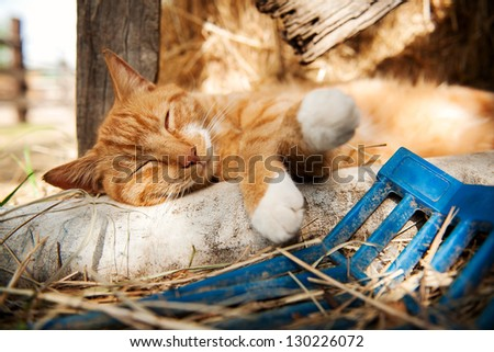 Cat sleeping on sand bag by hay