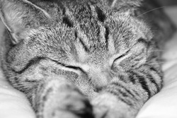 Cat Sleeping on the Bed