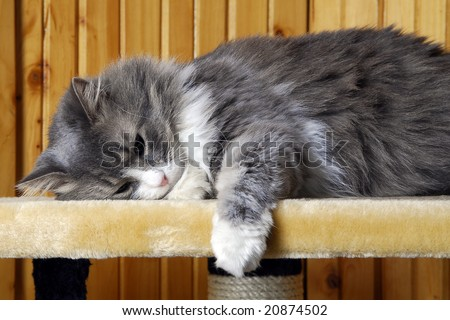 Cat sleeping on the highest level of a huge cat-house