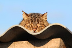 cat sleeping on the roof, basking in the sun and sunbathing