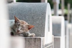 Cat sleeping on tombs, happily.