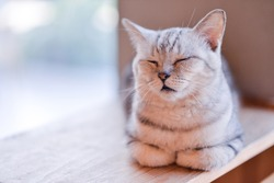 cat sleeping on wooden table