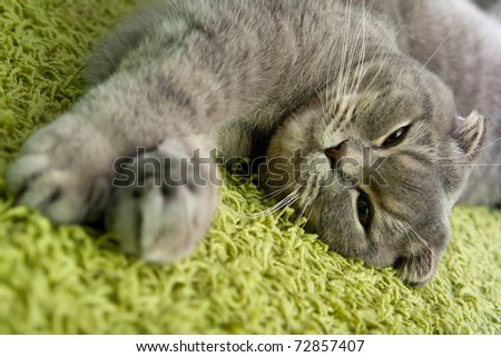 cat sleeps on the carpet at home