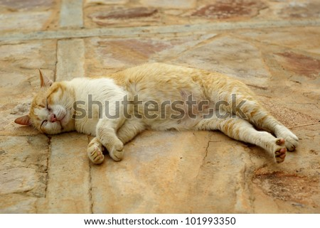 septic safe cat litter