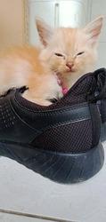 cat slumped the breeze and slumped
