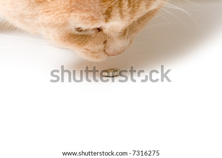 Cat smells a tablet close up on a white surface