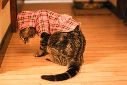 Cat sneaking around, doing the cat-walk with 6 toes!  Kitty knows how to pose like a pro in a stylish pink sweater. Shy, hiding, or sneaky?