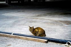 Cat standing in the parking lot