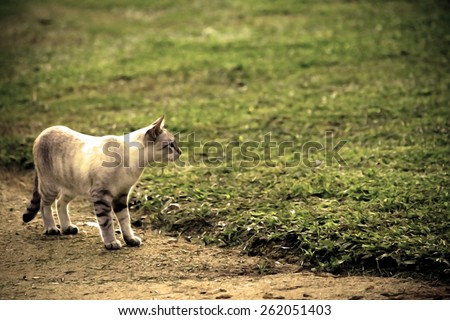 cat standing on the ground in vintage dry paint
