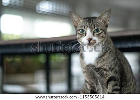 Cat stare bokeh background #1153505614