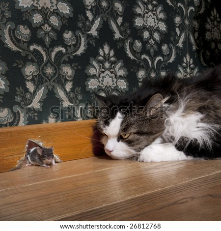 Stock Photo Cat staring at a mouse coming out of her hole