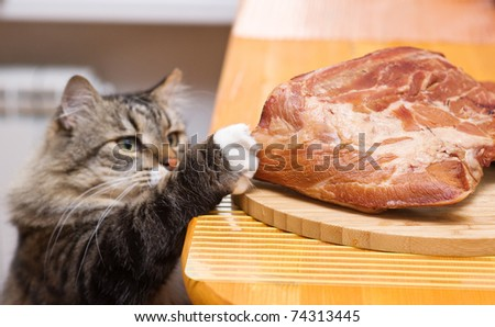 Cat steals piece of meat from the kitchen table