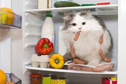 cat steals sausage from the refrigerator