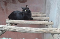 cat street blackcat stairs cat shorthair cat