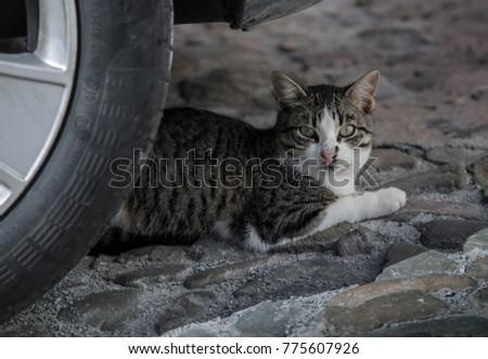 Cat Street Portrait #775607926
