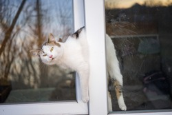 Cat stuck in the window. An open window is dangerous for pets. Take care of your pets.