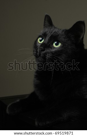 Cat studio portrait, low key