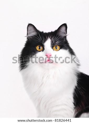 cat studio shot