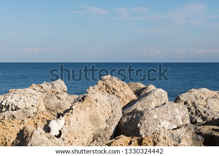 Cat sunbathing on the rocks with the sea on the background #1330324442