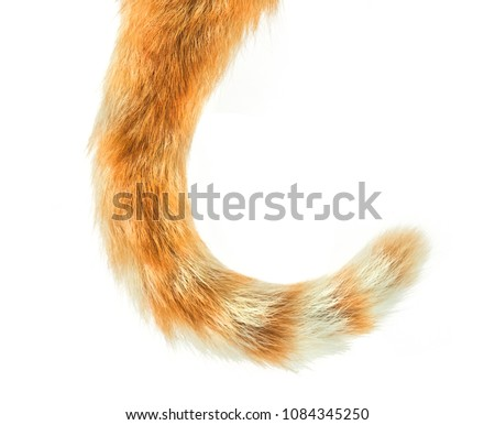 Photo of  Cat Tail isolated on white background