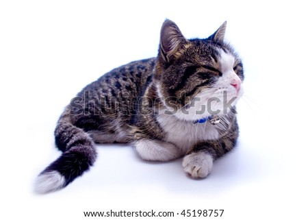 Cat taking a nap over white background