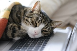 cat taking a quick power nap on laptop