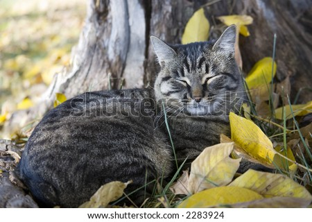 Cat taking nap in the leaves