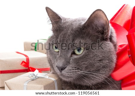 Cat thinking about gifts with white copyspace