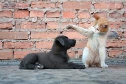 Cat training a puppy