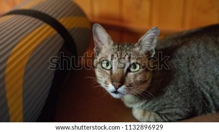Cat travel green eyes #1132896929
