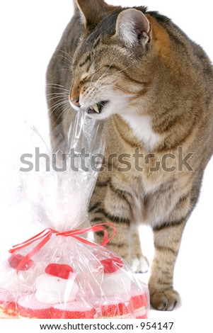 Cat trying if the plastic wrapping of the valentine candy is any good