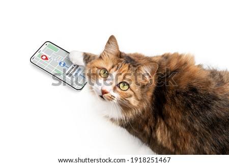 Cat using delivery app on smart phone to online track order on street map. Concept for e-commerce, track service or home delivery shopping. Funny pets using technology or pets imitating owners.  Photo stock ©