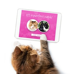 Cat using online dating app on tablet. Screen with match of male and female cat. Top view of single female kitty searching for love. Concept for pets using technology, or breeding cats or dogs.