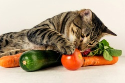 Cat & vegetables. Colorful close up photo with cat and vegetables. Healthy food.