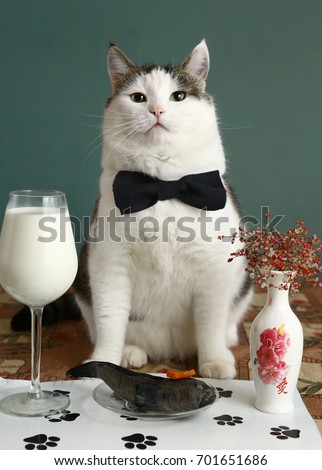 cat very important person with bow tie milk in wine glass and raw fish in pet reataurant close up photo