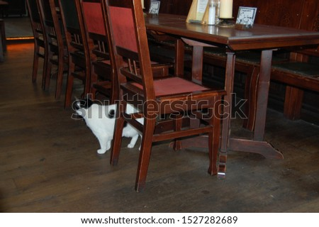 Cat visits old cafe restaurant #1527282689