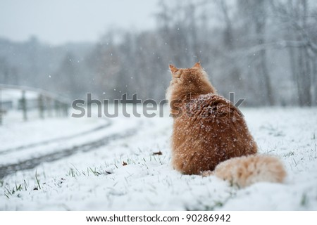Cat waiting at driveway during snow.