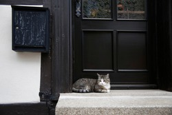 Cat waiting for the owner on a porch in front of a door as concept of devotion or patience.