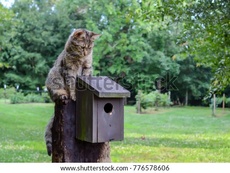 Cat waiting on top of birdhouse. Kitten watching, waiting and hunting for birds. Outdoor country setting with homemade rustic birdhouse.