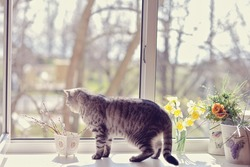 cat walk among the flowers on the windowsill looking out the window