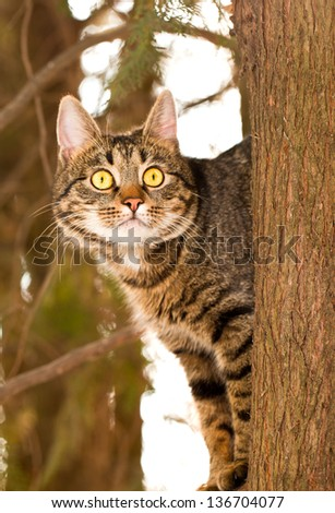 Cat walking on a tree with a very expressive eyes