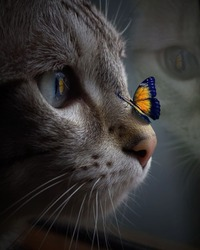 Cat was that still that butterfly landed on it's nose.
