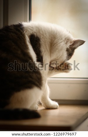 cat wash itself on the windowsill close up photo #1226979697