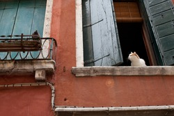 Cat watching a dove bird from window in Venice, Italy. Postcard theme, travel, pets life